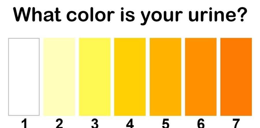 Meaning Behind Color of Your Urine